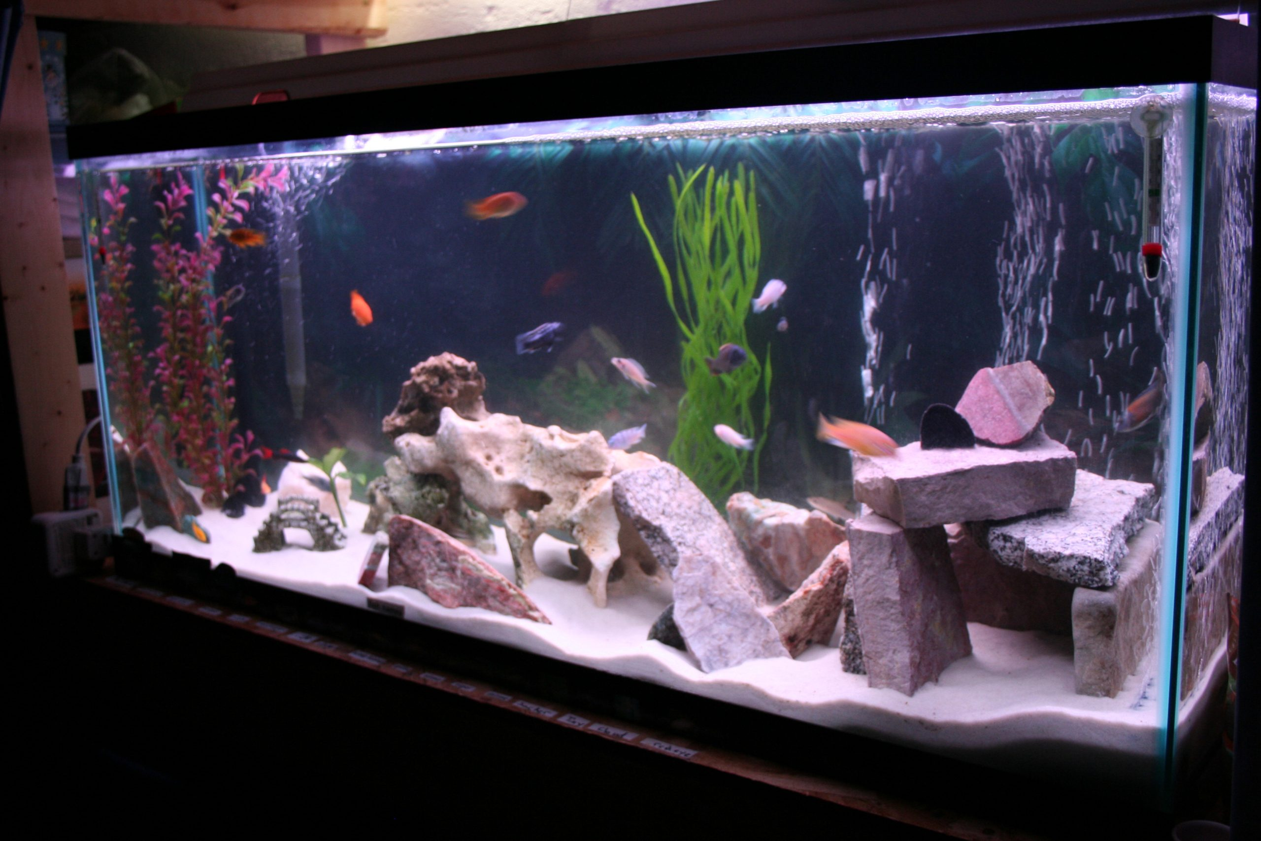aquariums to visit