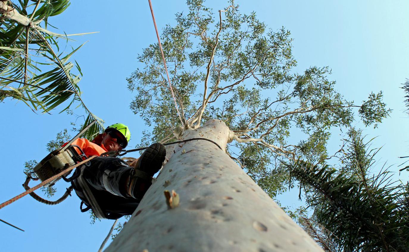 reasonable tree service near me