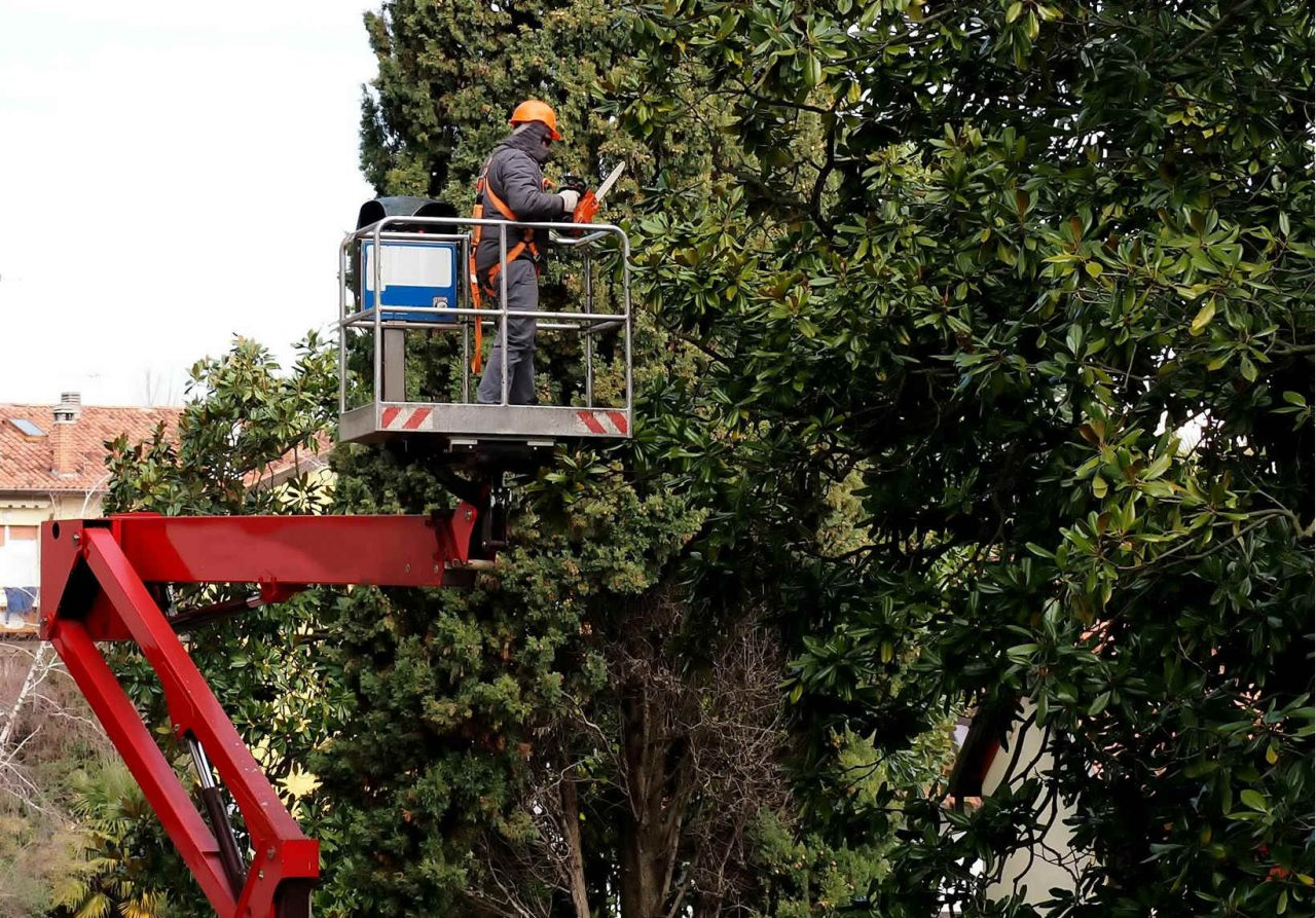Tree-service-cost