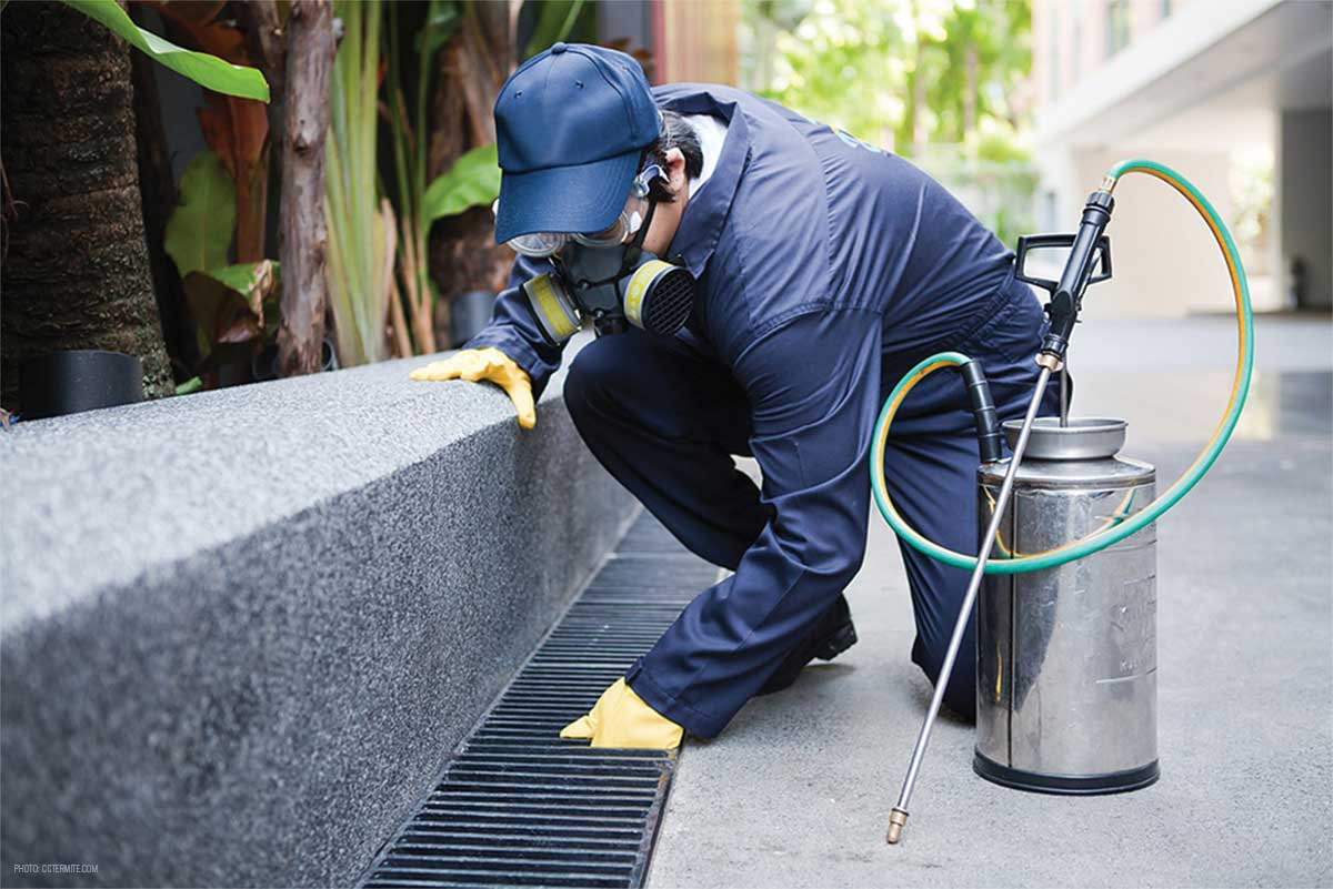 Pest-Control-Cost